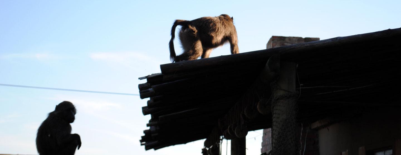 Hangklip Hotel Wildlife